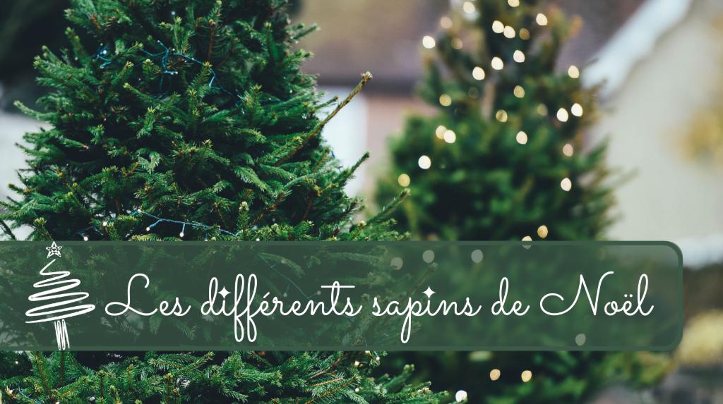 Quel sapin de Noel choisir cette année ?